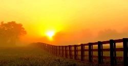 Sunset-Fence